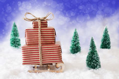 Trineo de la Navidad en nieve con el fondo azul Imagen de archivo libre de regalías