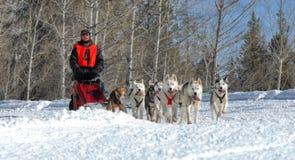 Trineo del perro que compite con en las montañas Imagen de archivo