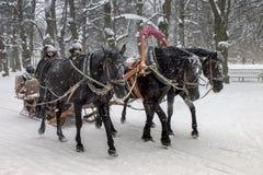 Trineo del tirón de los caballos con el passanger Imagen de archivo libre de regalías