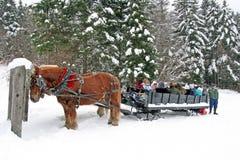 Trineo traído por caballo Fotografía de archivo libre de regalías