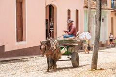 TRINIDAD, CUBA - 16 DE MAYO DE 2017: El caballo en arnés en un st de la ciudad foto de archivo libre de regalías