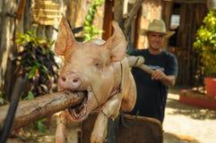TRINIDAD, CUBA - 26 maggio 2013 arrosto di maiale locale cubano dell'uomo sulla o Immagine Stock Libera da Diritti
