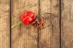 Trinidad moruga scorpion peppers, Stock Photo
