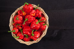 Trinidad moruga scorpion peppers royalty free stock image