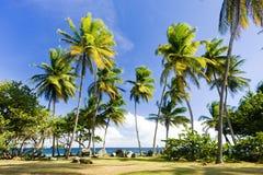 Trinidad y Tobago Fotografía de archivo libre de regalías