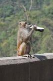 Trinken Lizenzfreies Stockbild