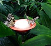 Trinken mit zwei Schmetterlingen Stockfotos