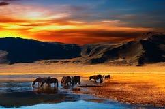 Trinkende Pferde stockfotos