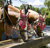 Trinkende Pferde Lizenzfreies Stockfoto