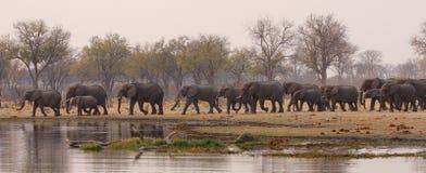 Trinkende Zeit des Elefanten Stockbild