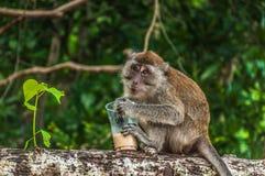Trinkender Kaffee des kleinen thailändischen Affen auf dem Baum Lizenzfreies Stockbild