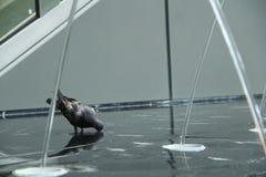 Trinkender Vogel Stockbild