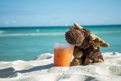 Trinkendes Cocktail der Elche am Strand lizenzfreie stockfotografie