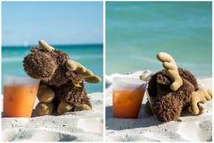 Trinkendes Cocktail der Elche am Strand 2 lizenzfreie stockfotografie