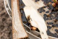 Trinkwasser der Bienen im Sommer Stockbild