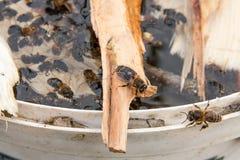 Trinkwasser der Bienen im Sommer Lizenzfreies Stockbild
