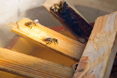 Trinkwasser der Bienen im Sommer Stockbilder