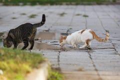 Trinkwasser der obdachlosen Katze Stockfotografie