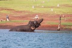 Trinkwasser des Elefanten im Fluss Lizenzfreies Stockbild
