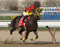 Trinniberg Wins The Bay Shore Stakes Stock Photo