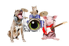 Trio of animal musicians. Isolated on white background Stock Image