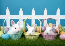 Trio av behandla som ett barn kaniner i easter korgar fotografering för bildbyråer