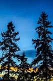 Trio av granträd Fotografering för Bildbyråer