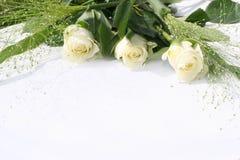 Trio branco das rosas imagem de stock royalty free