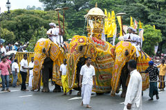 A trio of ceremonial elephants head along a street in Kandy during the Day Perahera in Sri Lanka. Stock Image