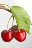 Trio of cherries Royalty Free Stock Image