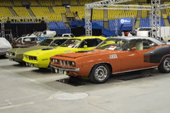 Trio of cuda Royalty Free Stock Image