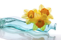 Trio of Daffodils Royalty Free Stock Photography