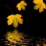 Trio das folhas douradas Fotos de Stock Royalty Free