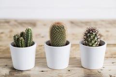 Trio de cactus Images stock