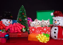 Trio de chaton de Noël Images stock