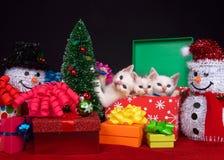 Trio de chaton de Noël Photos libres de droits