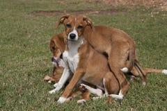 Trio dei cuccioli allegri che risiedono nell'erba verde fotografia stock libera da diritti