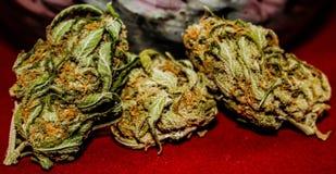 Trio dei germogli medici della cannabis immagine stock libera da diritti