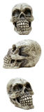 Trio del cranio Fotografia Stock Libera da Diritti