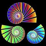 Trio del Nautilus Immagine Stock Libera da Diritti