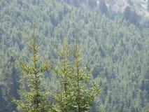 Trio dell'albero fotografie stock