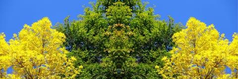 Trio dell'albero Fotografia Stock Libera da Diritti