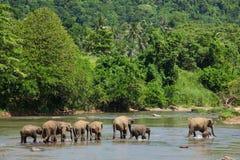 Trio der Elefanten Stockfoto