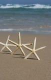 Trio des poissons d'étoile Images libres de droits