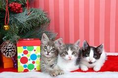 Trio di Natale dei gattini Fotografia Stock Libera da Diritti
