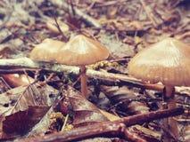 Trio do cogumelo Fotografia de Stock