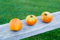 Trio do tomate Imagens de Stock