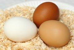 Trio dos ovos Fotos de Stock
