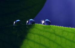 Trio drop on leaves Stock Images