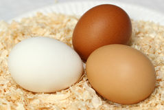 Trio of Eggs. Three eggs, one white, one brown and one speckledy, sitting on a bed of wood chippings stock photos